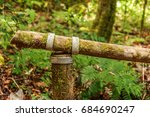 Mossy Bamboo Or Wood With Knot...