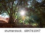 sun shining through fresh green ... | Shutterstock . vector #684761047