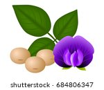 ripe soybeans  flower and... | Shutterstock .eps vector #684806347