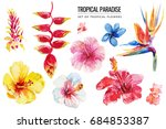 watercolor tropical floral... | Shutterstock . vector #684853387