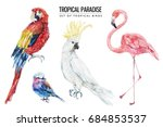 watercolor tropical bird... | Shutterstock . vector #684853537