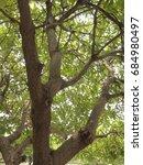 big tree  | Shutterstock . vector #684980497