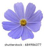 light blue flower kosmeja white ...   Shutterstock . vector #684986377