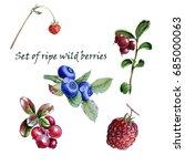 set watercolor botanical... | Shutterstock . vector #685000063