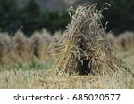 Small photo of Corn thatching stook near the village of Hilcott, Wiltshire, UK