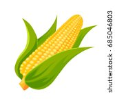 fresh delicious corn  can be... | Shutterstock .eps vector #685046803