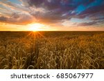 colorful sunset over wheat field   Shutterstock . vector #685067977