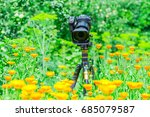 macro photography in nature.... | Shutterstock . vector #685079587