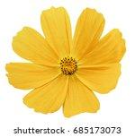 yellow flower kosmeja white... | Shutterstock . vector #685173073