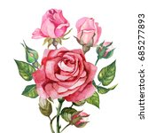 rose and buds.watercolor | Shutterstock . vector #685277893