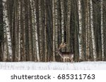 winter wildlife landscape with...   Shutterstock . vector #685311763