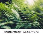 texture of plants in summer | Shutterstock . vector #685374973