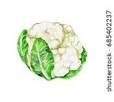 watercolor cauliflower. hand... | Shutterstock . vector #685402237