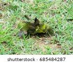 Small photo of 2 female Sunbirds fighting aggressiveness