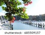 Pohutukawa Tree And Flowers At...