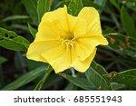 summer flowers  yellow onagre... | Shutterstock . vector #685551943