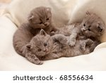 Stock photo three kitten lying on white cloth 68556634