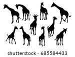 a high quality giraffe animal... | Shutterstock . vector #685584433