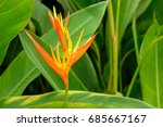 close up detail of a the... | Shutterstock . vector #685667167