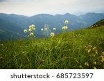 Small photo of Allium victorialis in mountains