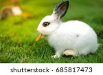 Stock photo a lovely white rabbit eat carrot in green field 685817473