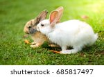 Stock photo lovely white and brown rabbit eat carrot in green field 685817497
