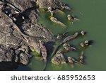 Multiple Marine Iguana In Alga...