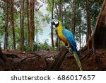 macaw parrot blue gold in... | Shutterstock . vector #686017657