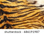 texture of wild tiger leather... | Shutterstock . vector #686191987