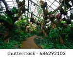 garden plants in kebun raya... | Shutterstock . vector #686292103