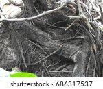 Roots Big Trunk Texture ...