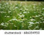 White Flowers On A Field In A...