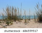 seaside beach with grass and... | Shutterstock . vector #686559517
