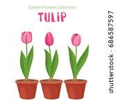 spring flower in flower pot.... | Shutterstock .eps vector #686587597