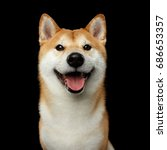 portrait of smiling shiba inu... | Shutterstock . vector #686653357