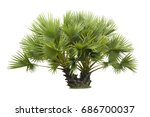 small green palm tree evergreen ...   Shutterstock . vector #686700037