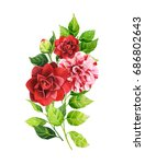 camellia flowers and leaves... | Shutterstock . vector #686802643