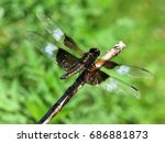 A Large Dragonfly Lands On A...