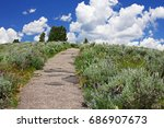 walking path lined with summer...   Shutterstock . vector #686907673