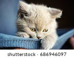 Stock photo cute little kitten 686946097