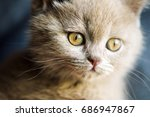 Stock photo cute little kitten 686947867