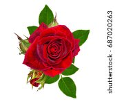 flower composition. a bud of a... | Shutterstock . vector #687020263