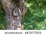 Small photo of A birdhouse on an old Acer opalus tree trunk