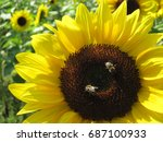 two bees are sitting on the... | Shutterstock . vector #687100933