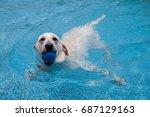 labrador retriever swimming in... | Shutterstock . vector #687129163