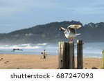 Seagull Perching On Wooden Pos...