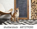 siba inu in the room. red dog... | Shutterstock . vector #687279283