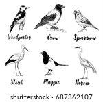 birds set sketch. collection of ...   Shutterstock .eps vector #687362107