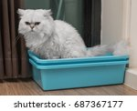 Chinchila Persian Cat Using...