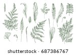 fern realistic collection. hand ... | Shutterstock .eps vector #687386767